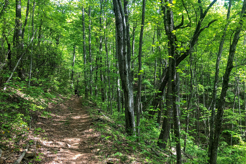 Little Hickory Top Trail -- 2,880'