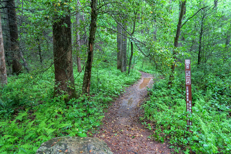 Lower Sidehill Connector Trail @ Forest Road 479