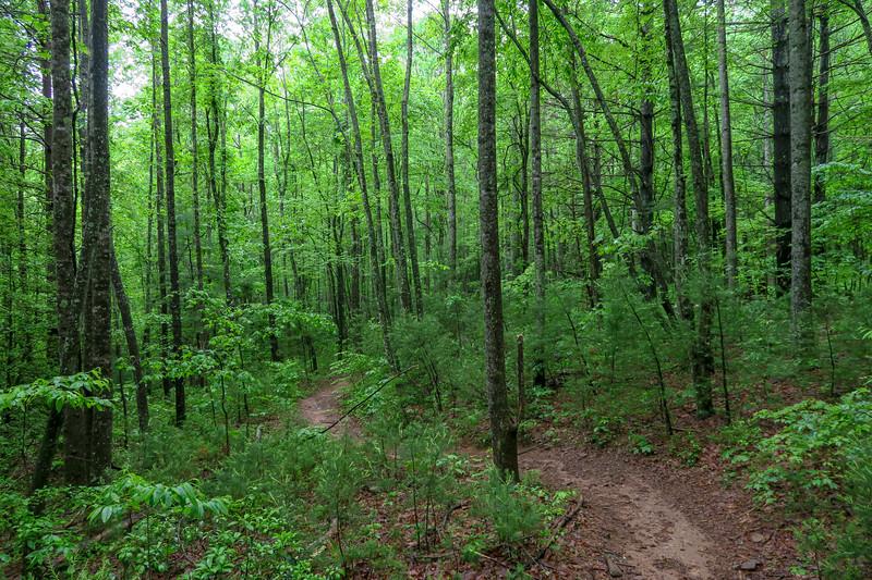 Lower Sidehill Trail -- 2,620'