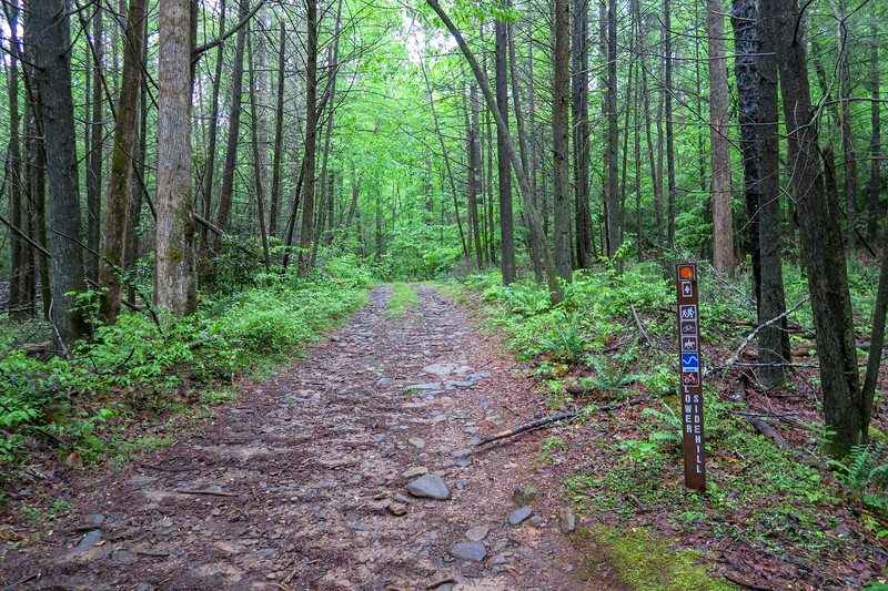 Lower Sidehill Trail/Forest Road 479G Lower Junction