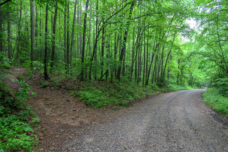 Lower Sidehill Trail @ Forest Road 479 -- 2,580'