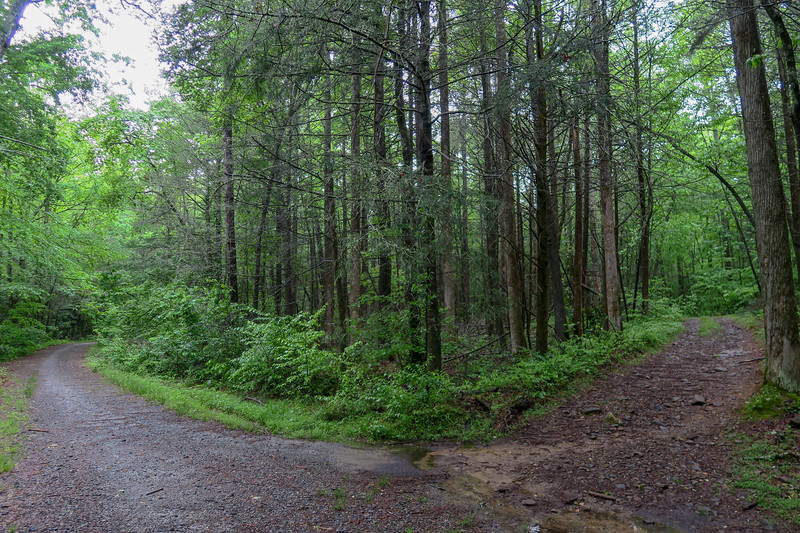 Lower Sidehill Trail/Forest Road 479G Lower Junction -- 2,290'
