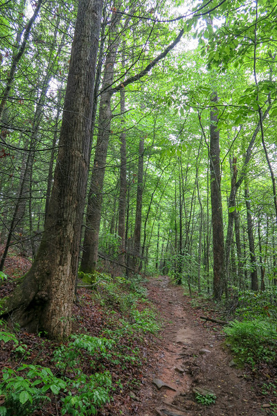 Lower Sidehill Connector Trail