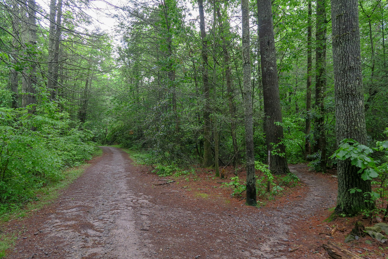 Lower Sidehill Trail/Forest Road 479G Upper Junction