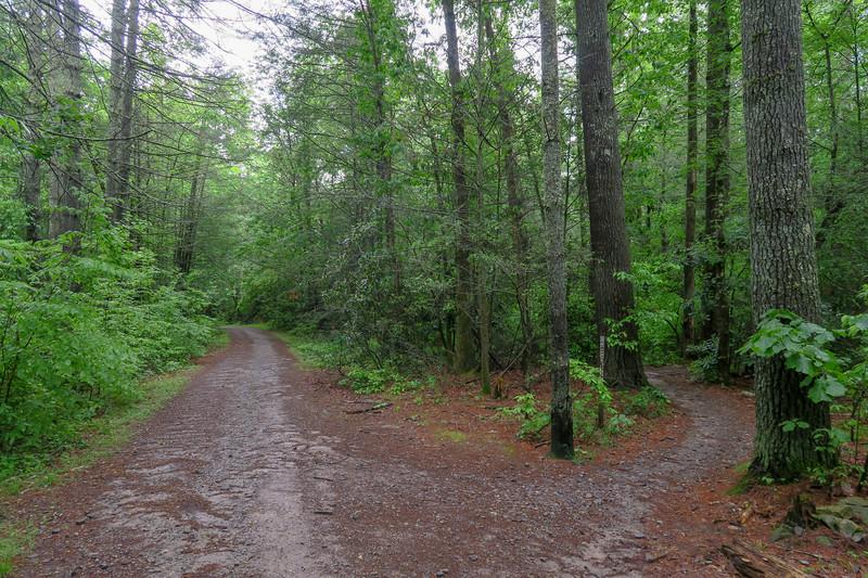 Lower Sidehill Trail/Forest Road 479G Upper Junction