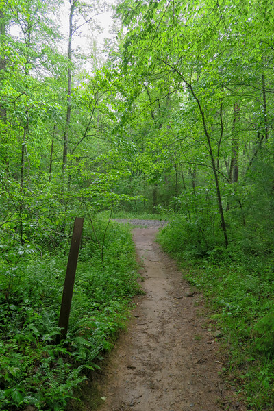 Lower Sidehill Trail/Forest Road 479F Junction