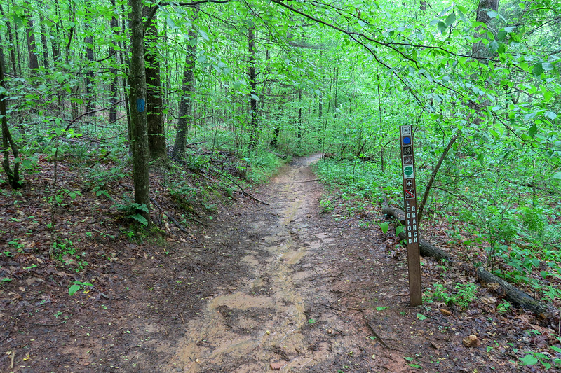 Wolf Branch-Ledford Branch Trail Junction -- 2,260'
