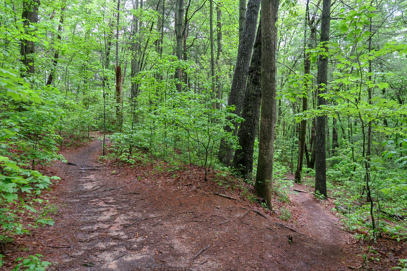 Ledford Branch Trail -- 2,230'