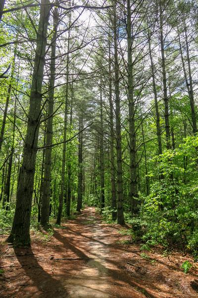 Deer Lodge Lake Trail -- 2,270'