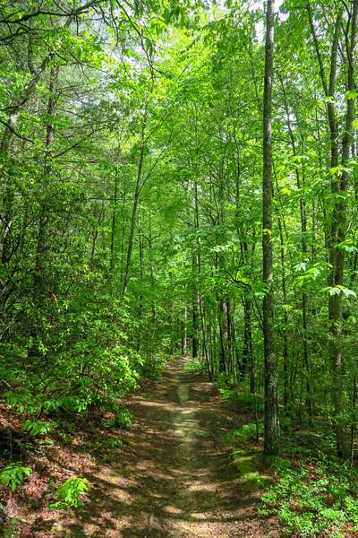 Deer Lodge Lake Trail -- 2,260'