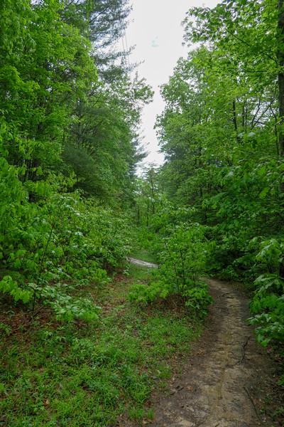 Deer Lodge Lake Trail -- 2,200'