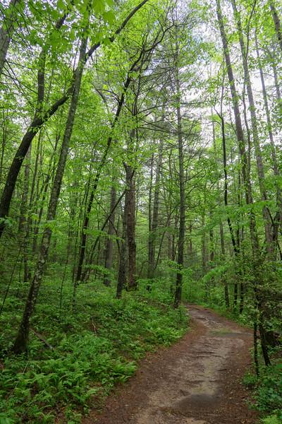 Wolf Branch Trail -- 2,170'