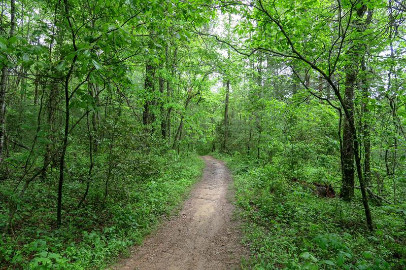 Deer Lodge Lake Trail -- 2,180'