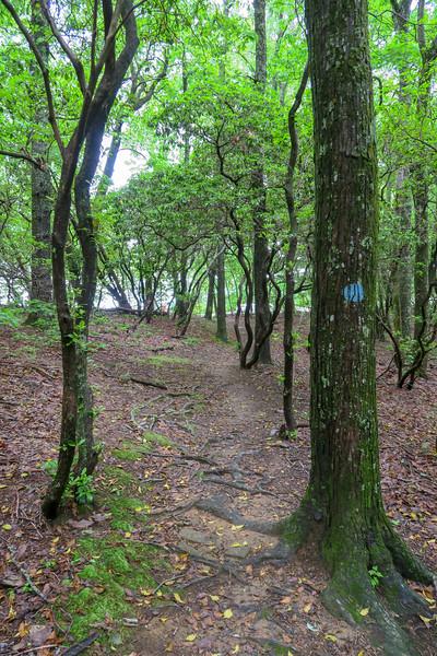 MST Access Path -- 3,030'