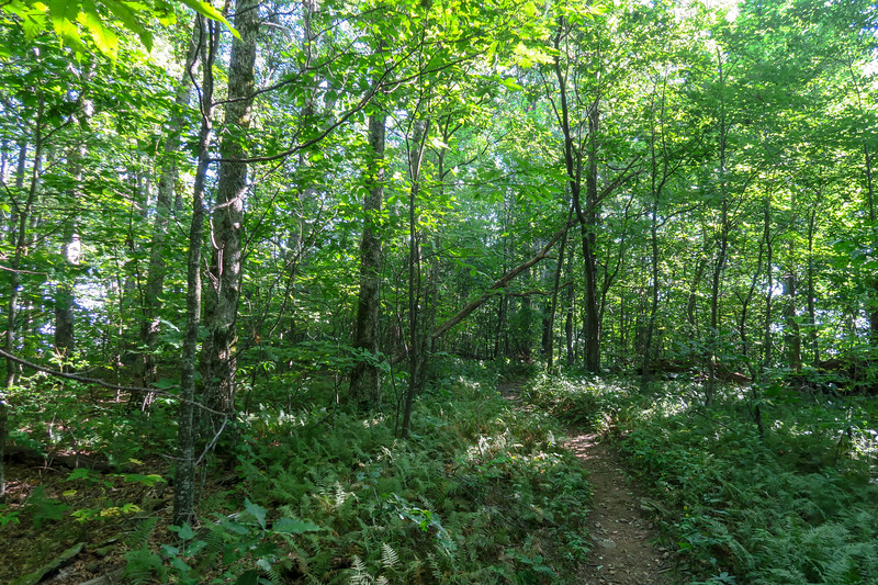 Laurel Mountain Trail -- 4,560'