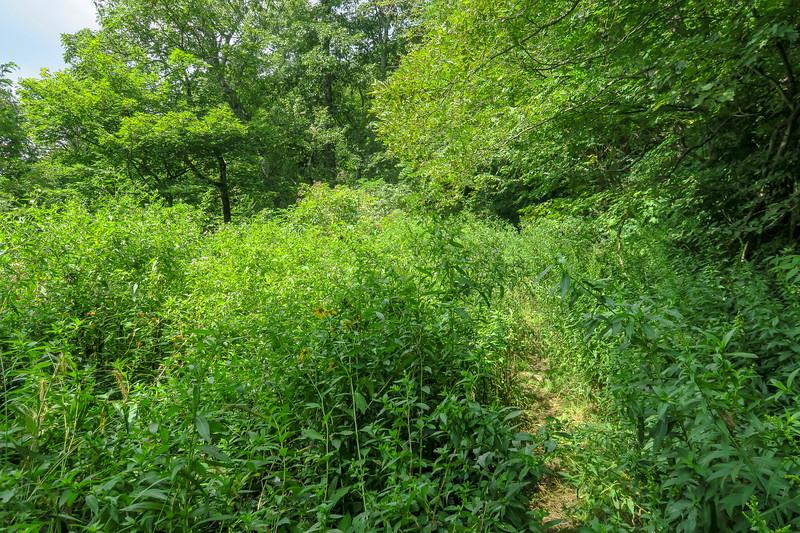 Big Creek Trail -- 4,760'