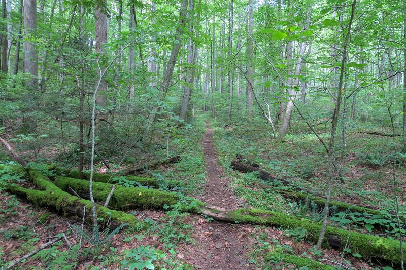 Big Creek Trail -- 2,660'