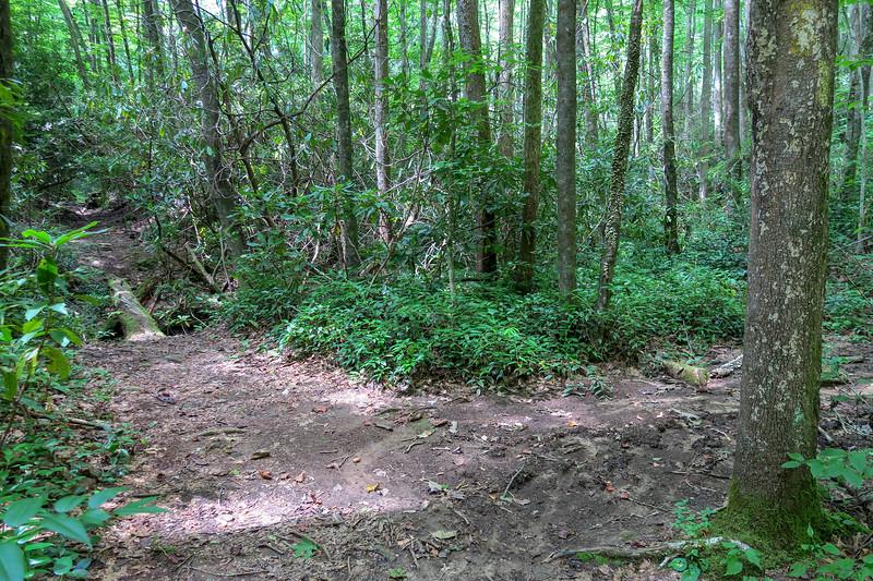 Big Creek Trail-Big Creek/Middle Fork Connector Path Junction -- 2,730'