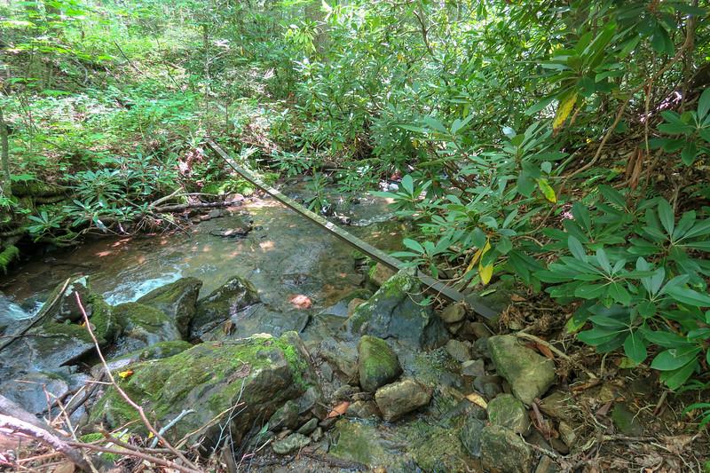 Big Creek Trail -- 2,890'