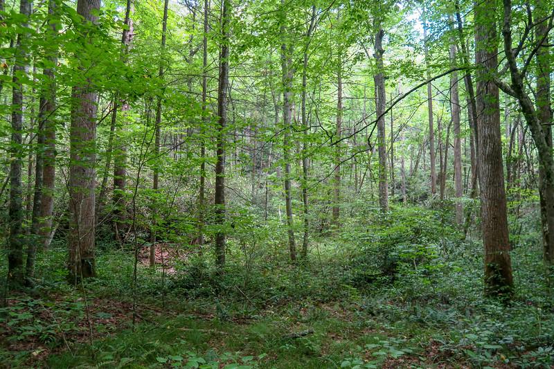 Big Creek Trail -- 2,680'