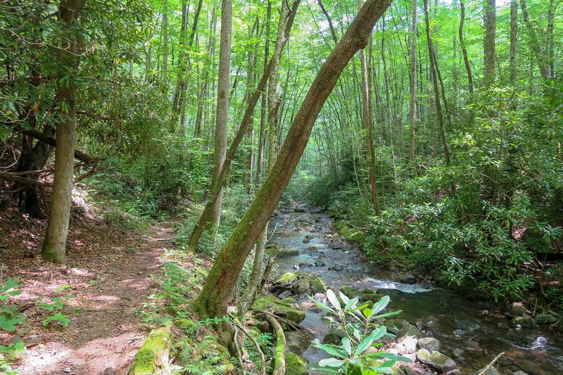 Big Creek Trail -- 2,740'