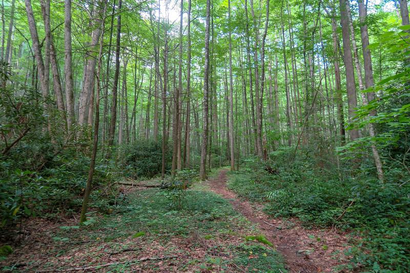Big Creek Trail -- 2,770'