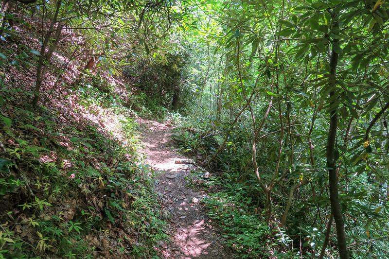 Big Creek Trail -- 2,540'