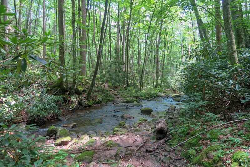 Big Creek Trail -- 2,780'