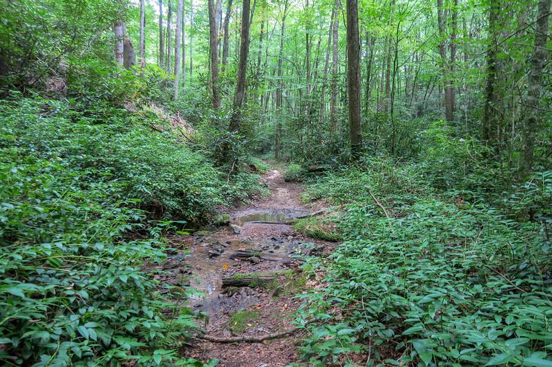 Big Creek Trail -- 2,720'