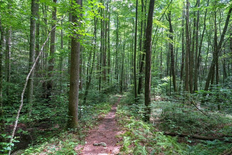 Big Creek Trail -- 2,760'