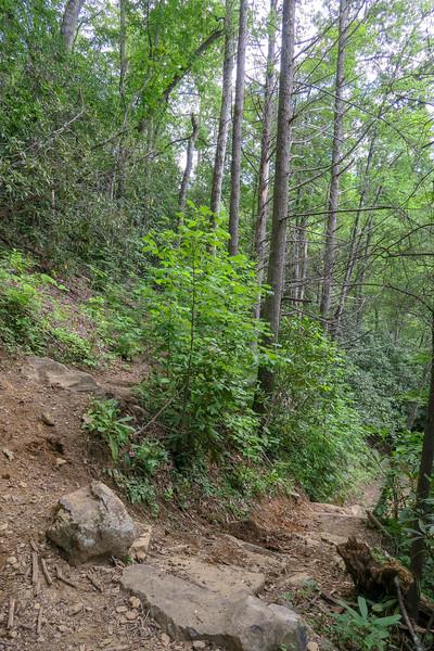 Big Creek-Spencer Branch Trail Junction -- 2,480'