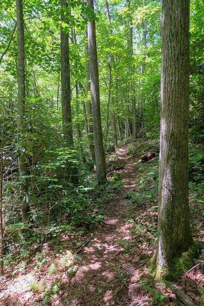 Big Creek Trail -- 2,820'