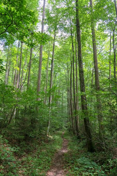 Big Creek Trail -- 2,600'
