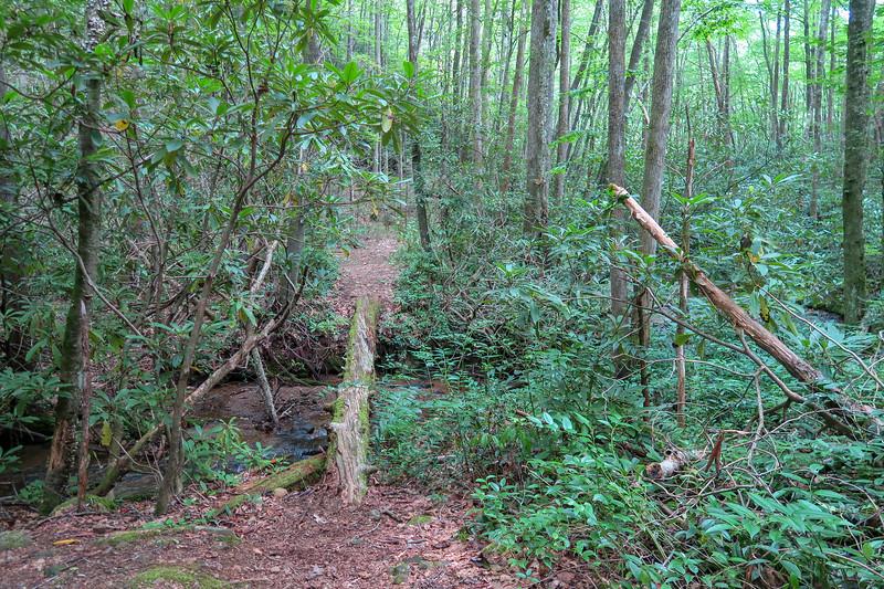 Big Creek Trail -- 2,750'
