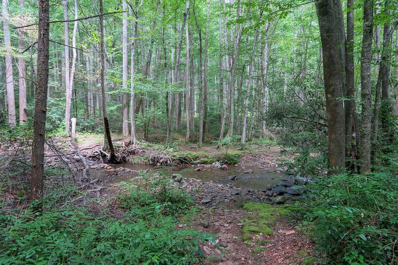 Big Creek Trail -- 2,650'