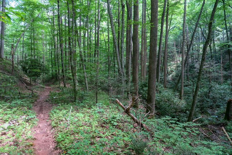 Big Creek Trail -- 2,940'