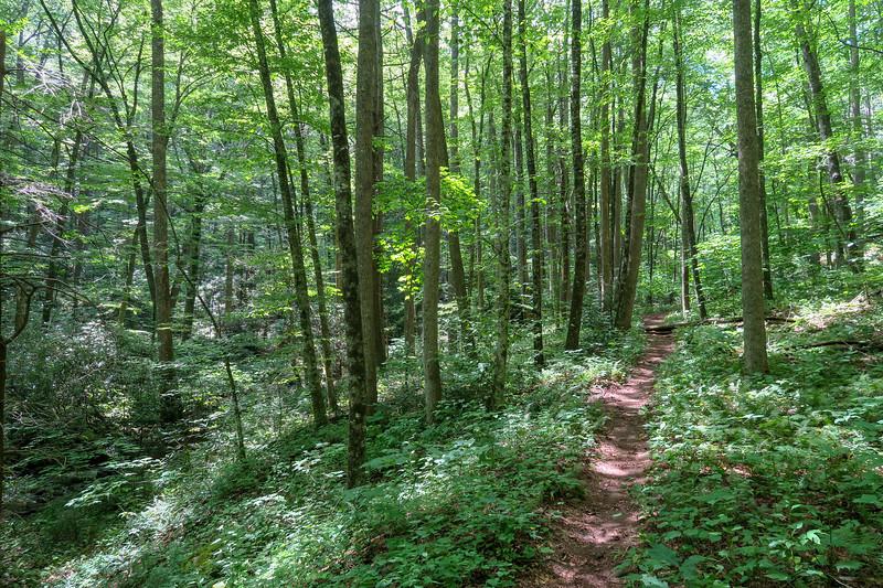 Big Creek Trail -- 2,930'