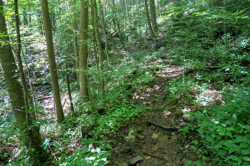Big Creek Trail -- 2,840'