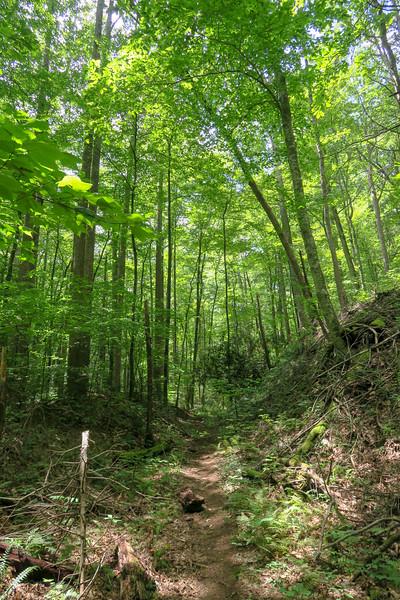 Big Creek Trail -- 2,900'