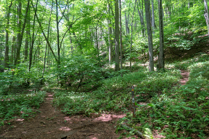 Big Creek Trail-Big Creek/Laurel Mountain Connector Path Junction -- 2,950'
