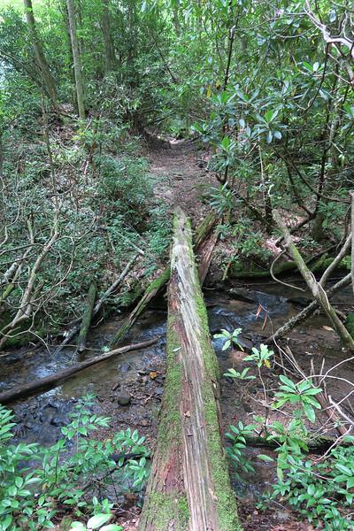 Big Creek Trail -- 2,730'