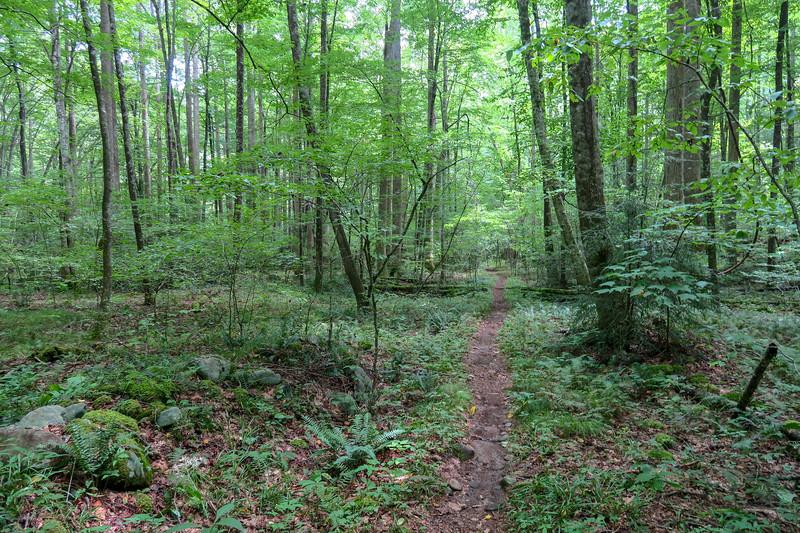 Big Creek Trail -- 2,670'