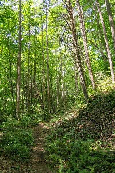 Big Creek Trail -- 2,880'