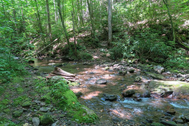 Big Creek Trail -- 2,800'