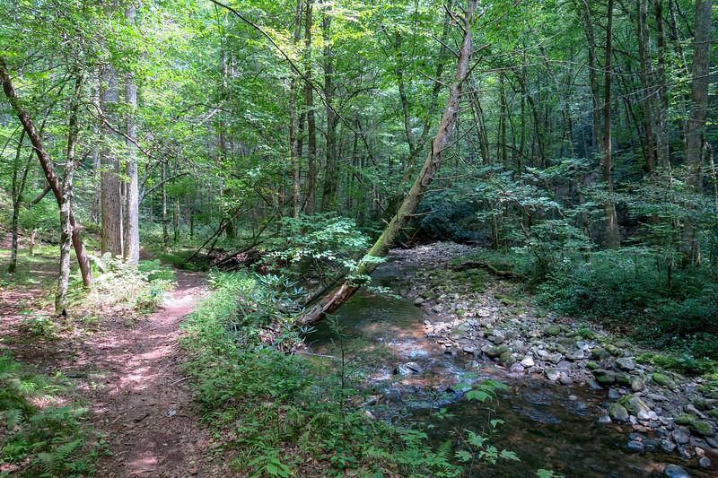 Big Creek Trail -- 2,560'