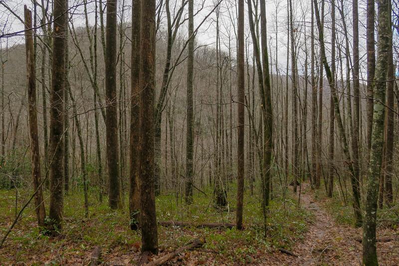 Big East Fork Trail -- 3,500'