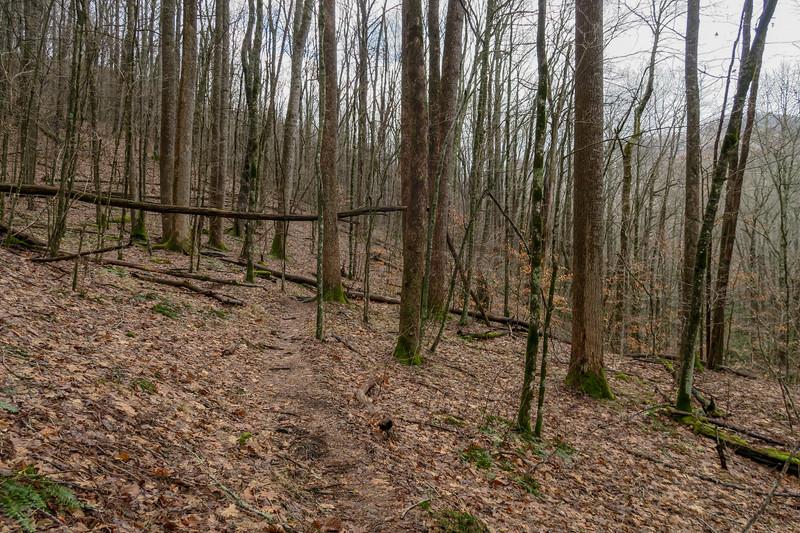 Big East Fork Trail -- 3,560'