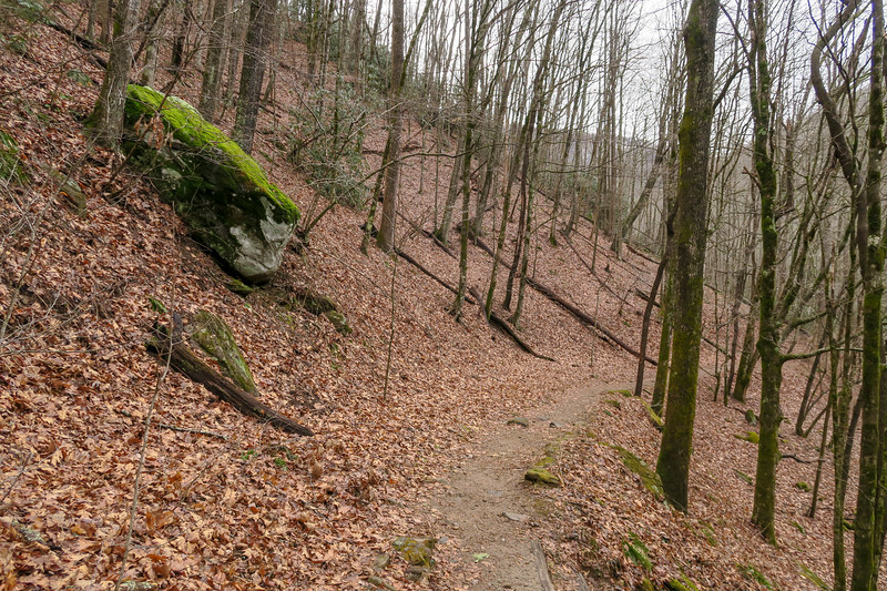 Big East Fork Trail -- 3,400'