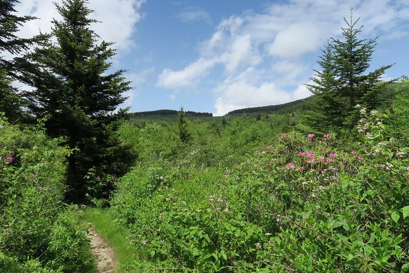 Flat Laurel Creek Trail - 5,650'