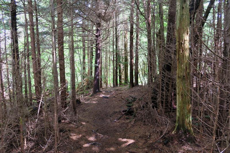 Mountains-to-Sea Trail - 5,840'